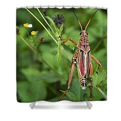 Eastern Lubber Grasshopper  Shower Curtain by Saija  Lehtonen