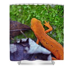 Eastern Newt Shower Curtain by David Rucker