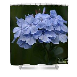 Eia Au La E Ke Aloha Blue Plumbago Shower Curtain by Sharon Mau