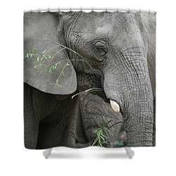 Elly At Lunch Shower Curtain by Karol Livote
