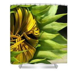 Emerging Sunflower Shower Curtain by Sabrina L Ryan