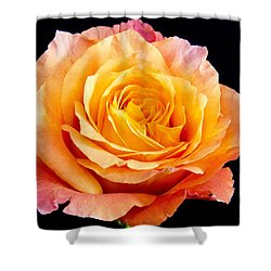 Enticing Beauty The Orange  Rose Shower Curtain by Daphne Sampson