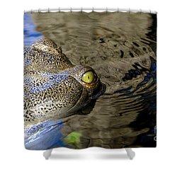 Eye Of The Crocodile Shower Curtain by David Lee Thompson