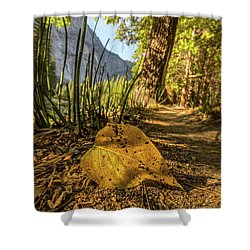Fall In Leaf Shower Curtain by Peter Tellone