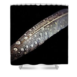 Feather Dew Shower Curtain by Nicklas Gustafsson