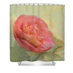 February Camellia Shower Curtain by Cindy Garber Iverson