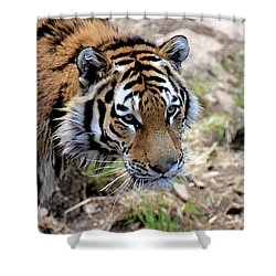 Feline Focus Shower Curtain by Angelina Vick