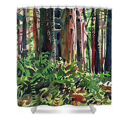 Ferns And Redwoods Shower Curtain by Donald Maier
