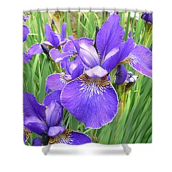 Fields Of Purple Japanese Irises Shower Curtain by Jennie Marie Schell