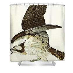 Fish Hawk Shower Curtain by John James Audubon