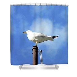 Flagpole Gull Shower Curtain by Al Powell Photography USA