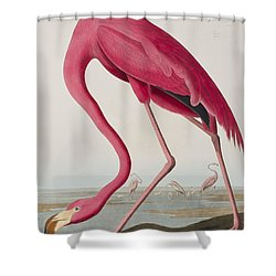 Flamingo Shower Curtain by John James Audubon