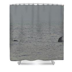 Flipper Shower Curtain by Bill Cannon