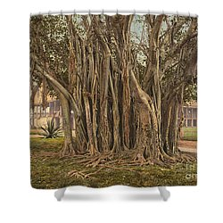 Florida: Rubber Tree, C1900 Shower Curtain by Granger
