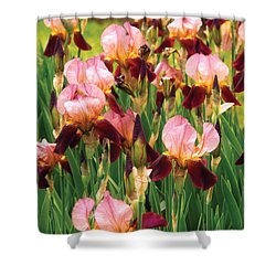 Flower - Iris - Gy Morrison Shower Curtain by Mike Savad