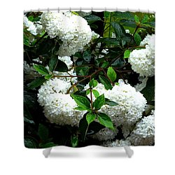 Flower Snow Balls Shower Curtain by Valerie Ornstein