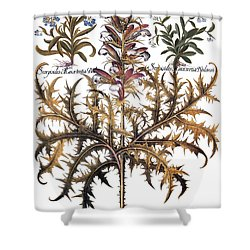 Forget-me-not & Acanthus Shower Curtain by Granger