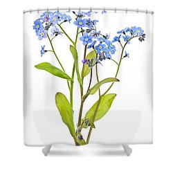 Forget-me-not Flowers On White Shower Curtain by Elena Elisseeva