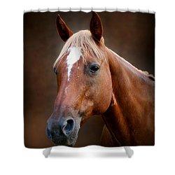 Fox - Quarter Horse Shower Curtain by Sandy Keeton