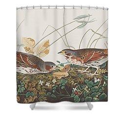 Fox Sparrow Shower Curtain by John James Audubon