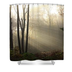 From Above Shower Curtain by Karol Livote