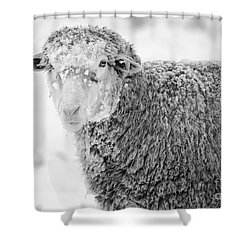 Frozen Dinner Shower Curtain by Mike  Dawson