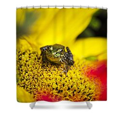Funny Frog On A Sunflower Shower Curtain by Christina Rollo