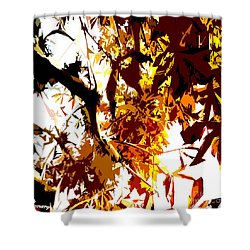 Gazing Into The Autumn Trees Shower Curtain by Patrick J Murphy