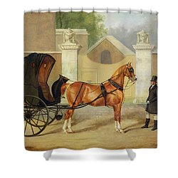 Gentlemen's Carriages - A Cabriolet Shower Curtain by Charles Hancock