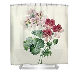 Geranium Variety Shower Curtain by Pierre Joseph Redoute
