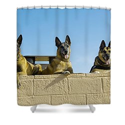 German Shephard Military Working Dogs Shower Curtain by Stocktrek Images