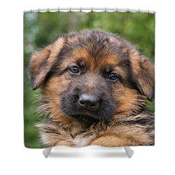 German Shepherd Puppy II Shower Curtain by Sandy Keeton