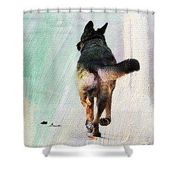 German Shepherd Taking A Walk Shower Curtain by Jai Johnson