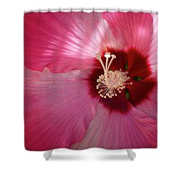 Giant Hibiscus Shower Curtain by Mary Lee Dereske