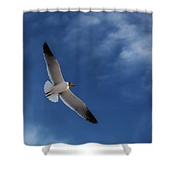 Glider Shower Curtain by Don Spenner