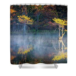 Glowing Cypresses Shower Curtain by Inge Johnsson