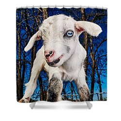Goat High Fashion Runway Shower Curtain by TC Morgan