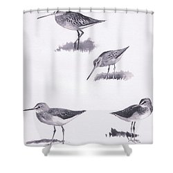 Godwits And Green Sandpipers Shower Curtain by Archibald Thorburn