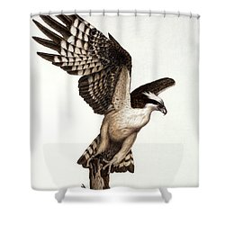 Going Fishin' Osprey Shower Curtain by Pat Erickson