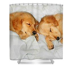 Golden Retriever Dog Puppies Sleeping Shower Curtain by Jennie Marie Schell