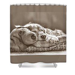 Golden Retriever Dog Sleeping With My Friend Sepia Shower Curtain by Jennie Marie Schell