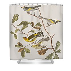 Golden Winged Warbler Or Cape May Warbler Shower Curtain by John James Audubon