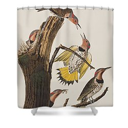 Golden-winged Woodpecker Shower Curtain by John James Audubon
