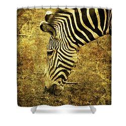 Golden Zebra  Shower Curtain by Saija  Lehtonen