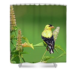 Shower Curtain featuring the photograph Goldfinch In A Flower Garden by Rodney Campbell