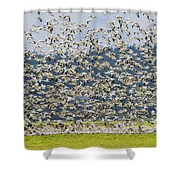 Goose Storm Shower Curtain by Mike Dawson