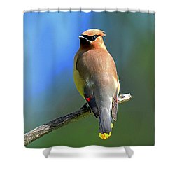 Shower Curtain featuring the photograph Gorgeous Cedar Waxwing by Rodney Campbell