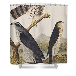 Goshawk And Stanley Hawk Shower Curtain by John James Audubon