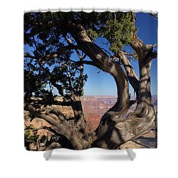 Grand Canyon No. 6 Shower Curtain by Sandy Taylor