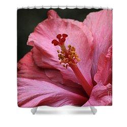 Grand Hibiscus Shower Curtain by Sabrina L Ryan